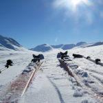 ski in Sarek