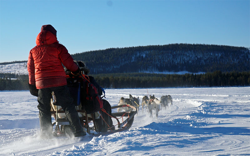 Dog sledding with Jokkmokkguiderna